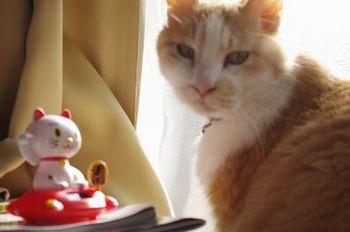 猫と猫.jpg